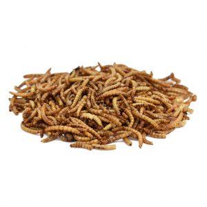 Peckish Mealworm Wild Bird Feed
