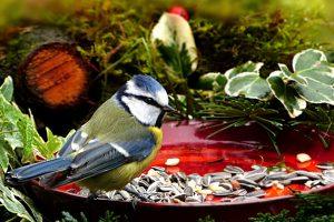 Feeding wild birds