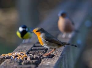 Food for birds in autumn